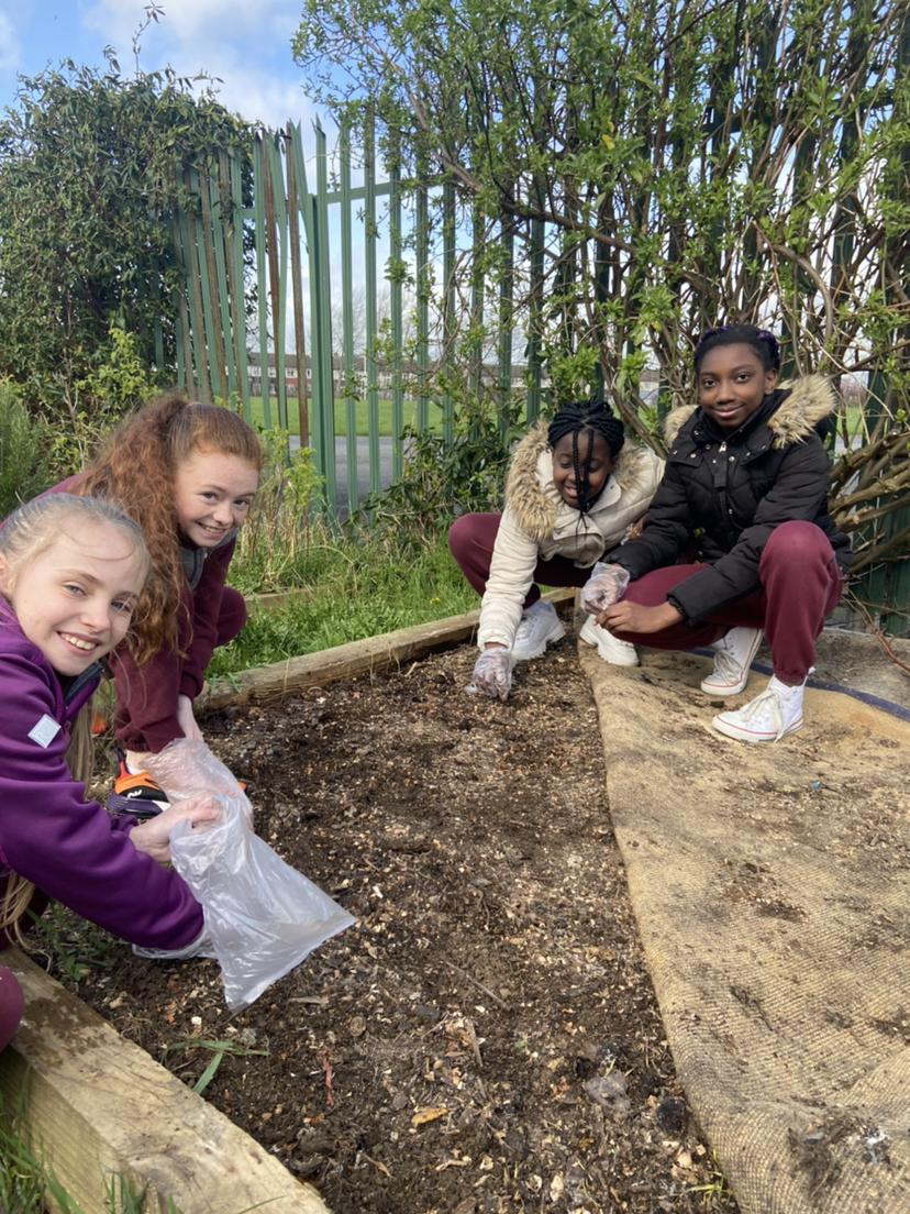 5th Class planting sunflowers in the garden
